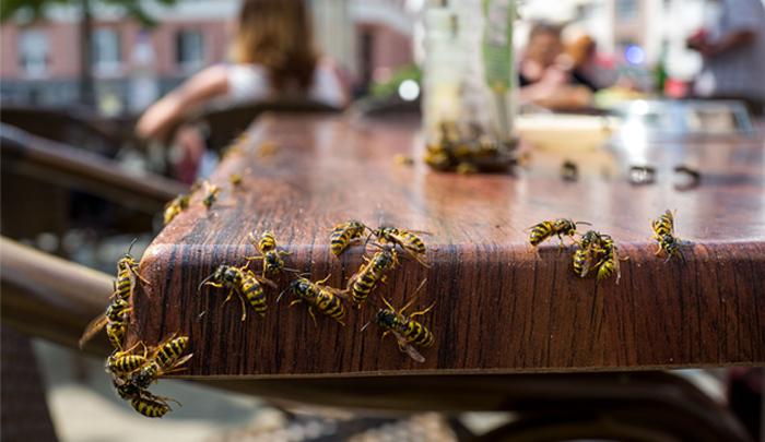 Stelling van de week: wespen